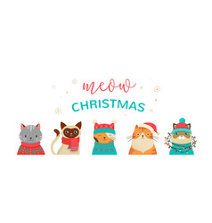 merry christmas greeting card with cute cats vector image