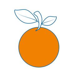 Orange citric fruit vector