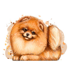 pomeranian small german spitz dogwall sticker vector image