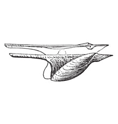 Wing shell vintage vector