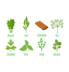 herbs and spices organic green condiment vector image