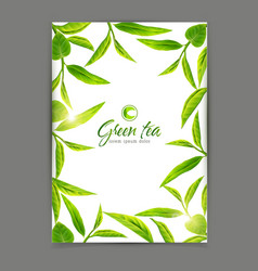 template with a frame of green tea leaves vector image vector image