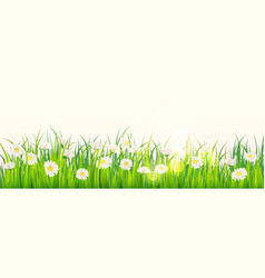 template background spring field flowers of vector image