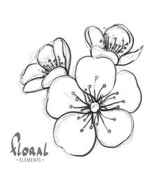 sakura flowers on a white background vector image vector image