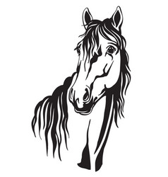 beautiful portrait line black contour horse vector image