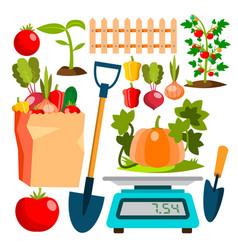 ecological vegetables gardening vegetable garden vector image