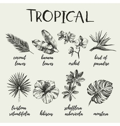 Hand drawn vintage retro sketch tropical plants vector