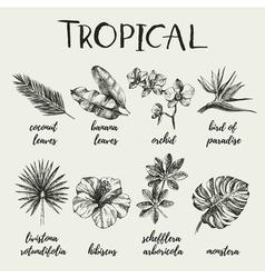 Hand drawn vintage retro sketch tropical plants vector