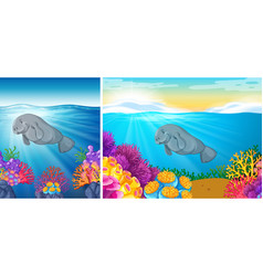 Two scene of manatee swimming under the sea vector