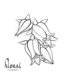 black and white sketch of a bellflower vector image vector image