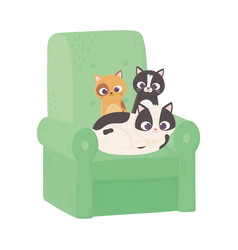 Cute cats different breeds in sofa cartoon vector