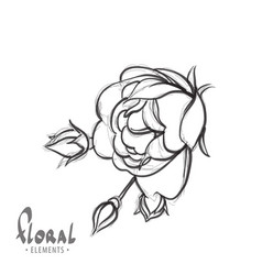 delicate rose on a white background vector image