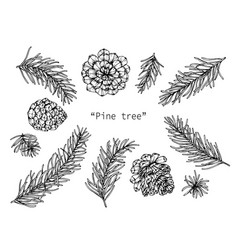 Pine cones drawing hand drawn line art vector