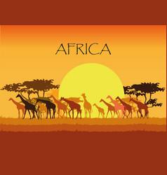 giraffes silhouettes in savannah vector image