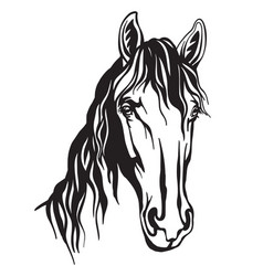Abstract portrait line monochrome contour horse vector