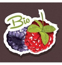 Bio raspberries tag vector image