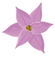 One pink flower bud Ipheion vector image