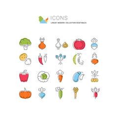 Set flat line icons vegetables vector