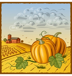 Landscape with pumpkins vector image vector image