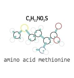 C5H11NO2S methionine amino acid molecule vector image