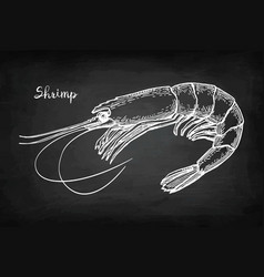 chalk sketch of shrimp vector image