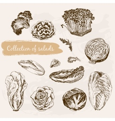 Collection of salads vector