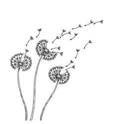 dandelion silhouettes dandelions grass pollen vector image