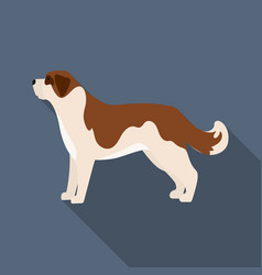 st bernard dog icon in flat style for web vector image