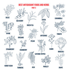 Antioxidant foods and herbs vector