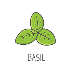 Basil line cooking isolated vector