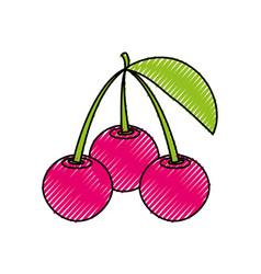 Delicious cherries fruits vector