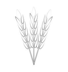 wheat harvest food vector image