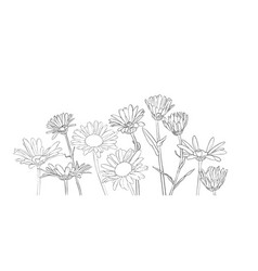 drawing daisy flowers vector image