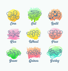 Set cereal types isolated icons corn oat vector