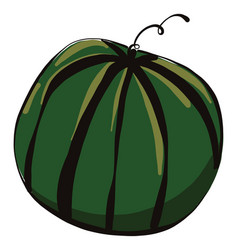 Big watermelon on white background vector