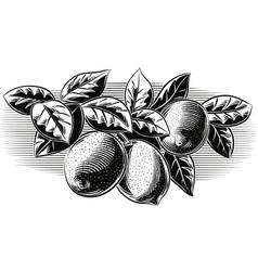 Branch lemons vector