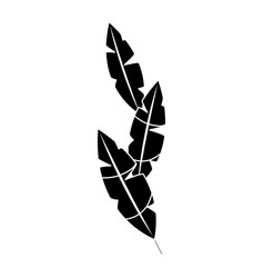 Feathers tropical icon image vector