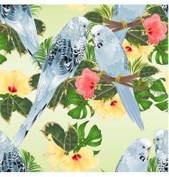 seamless texture birds budgerigars parakeets vector image