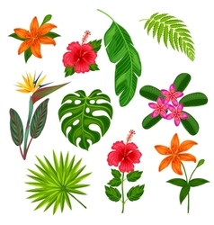 Set of stylized tropical plants leaves and vector image
