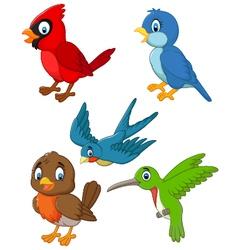 Cartoon birds collection set vector image