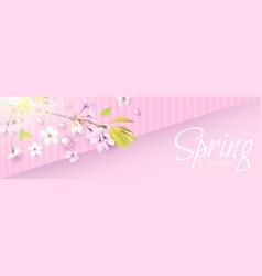 soft flower spring background cherry blossom vector image
