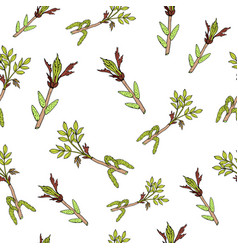 Spring branches with leaves and buds vector