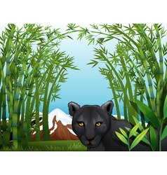 A black panther at the bamboo forest vector image