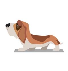 basset-hound minimalist image vector image