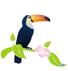 exotic bird toucan vector image