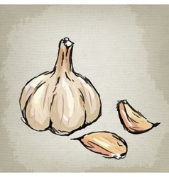 Fresh garlic vector