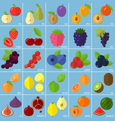 Flat design fruits and berries vector