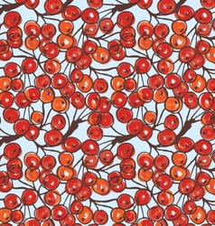 Rowan berries and brunches on blue vector