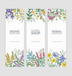 set vertical banners decorated with blooming vector image