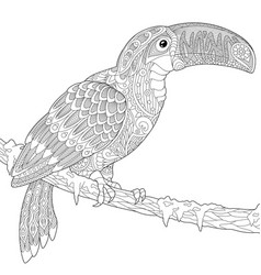 toucan adult coloring page vector image